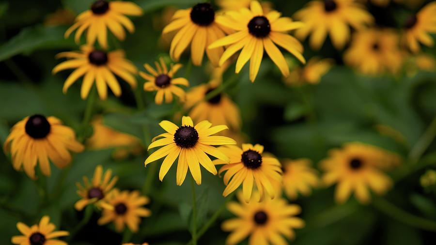 Flower Series #6 by Van Sutherland