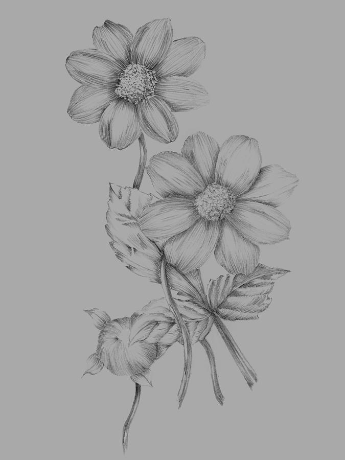 Flower Mixed Media - Flower Sketch by Naxart Studio