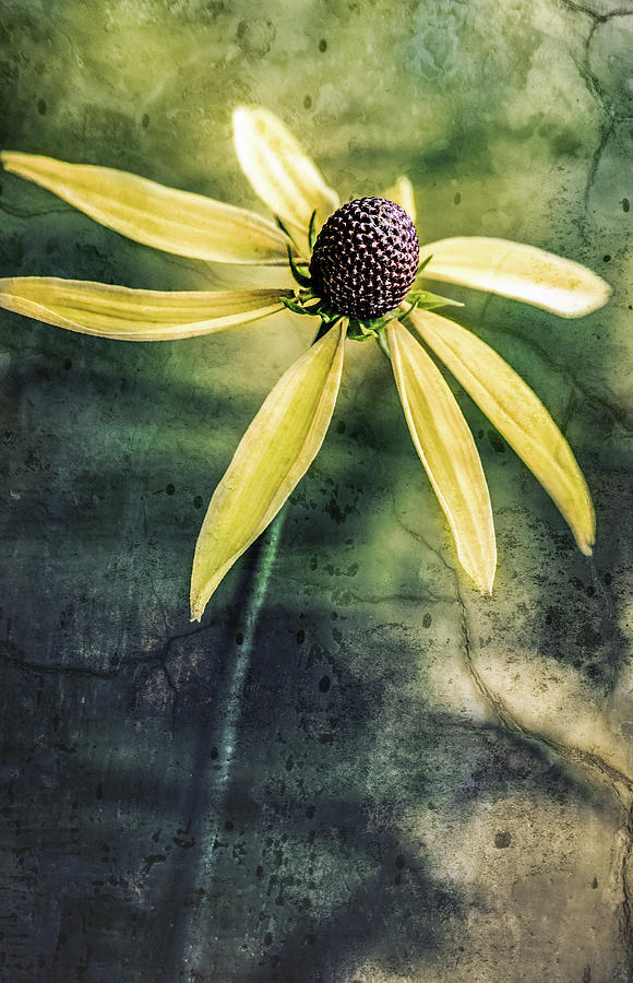 Flower Texture by Michael Arend