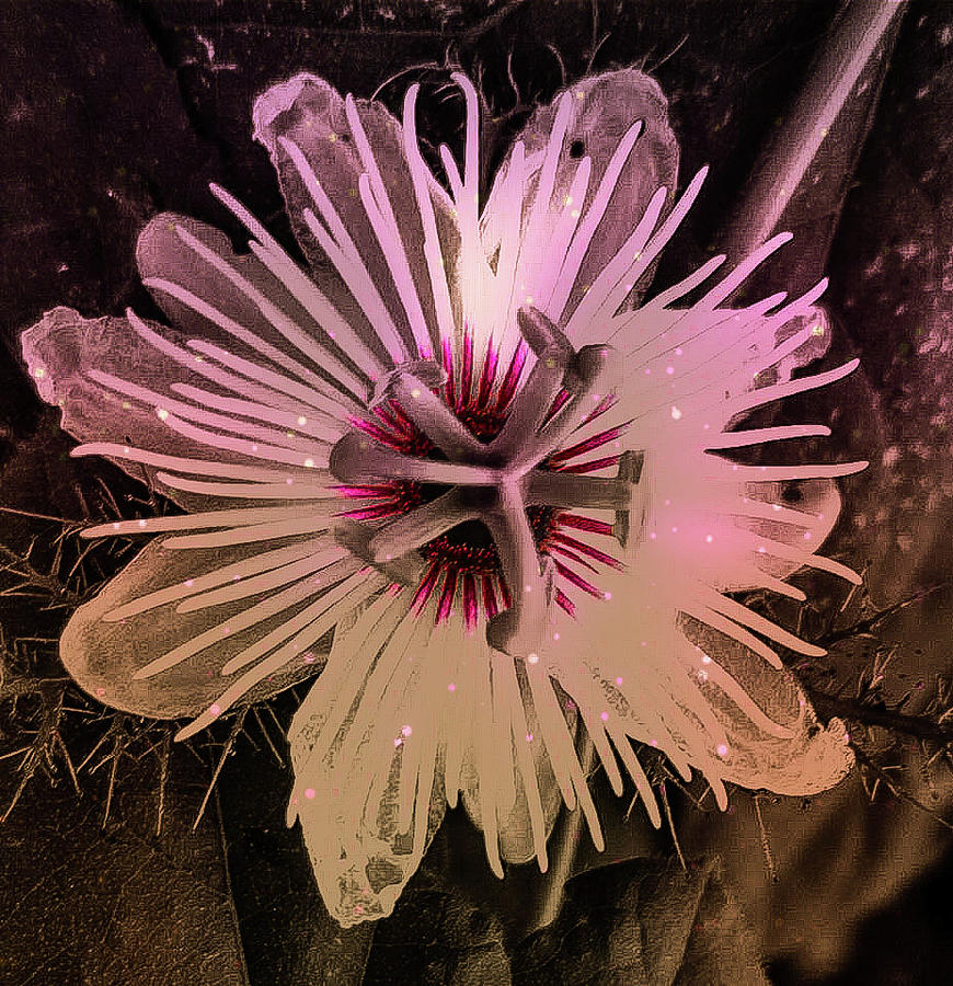 Flower With Tentacles Photograph
