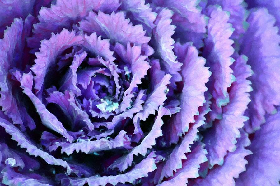 Flowering Kale Plant Macro  by Sandi OReilly