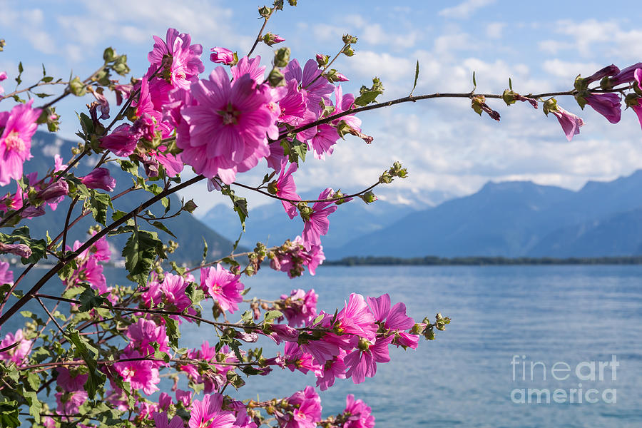 Geneve Photograph - Flowers Against Mountains And Lake by Rtstudio