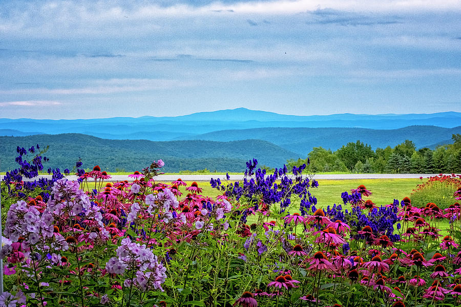 Flowers And Hills by Tom Singleton