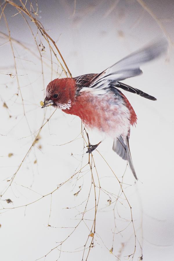 Wildlife Photograph - Flowers Blooming In Winter by Yoshikazu Wada