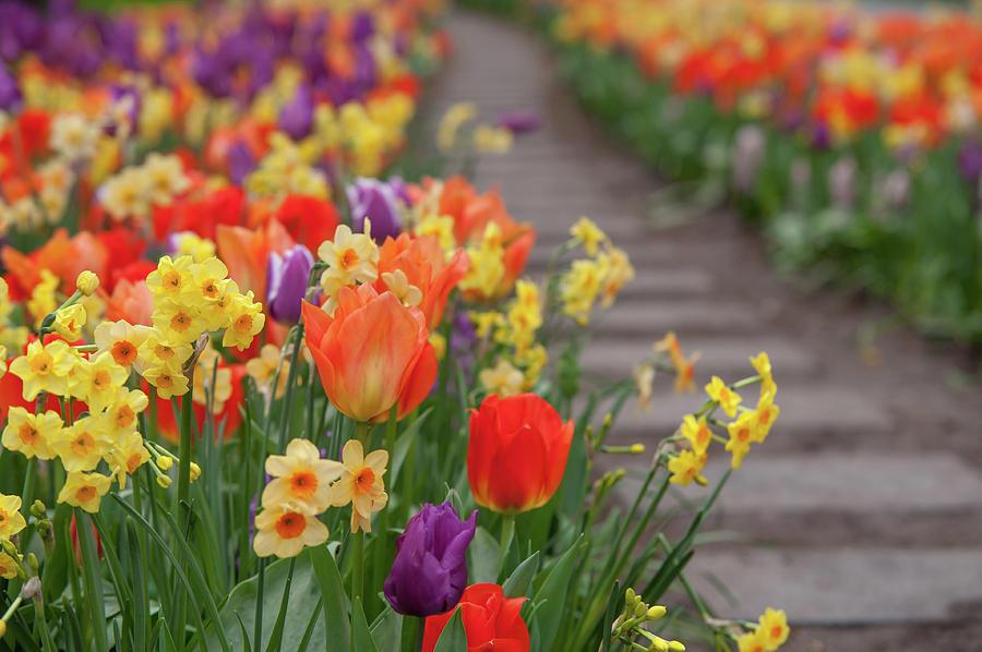 Flowers Greetings 1 by Jenny Rainbow