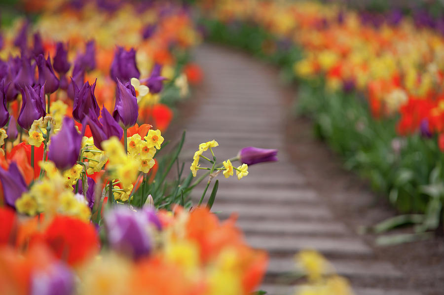 Flowers Greetings by Jenny Rainbow