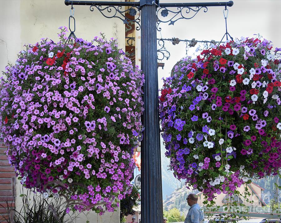 Leavenworth Photograph - Flowers In Balance by Mae Wertz