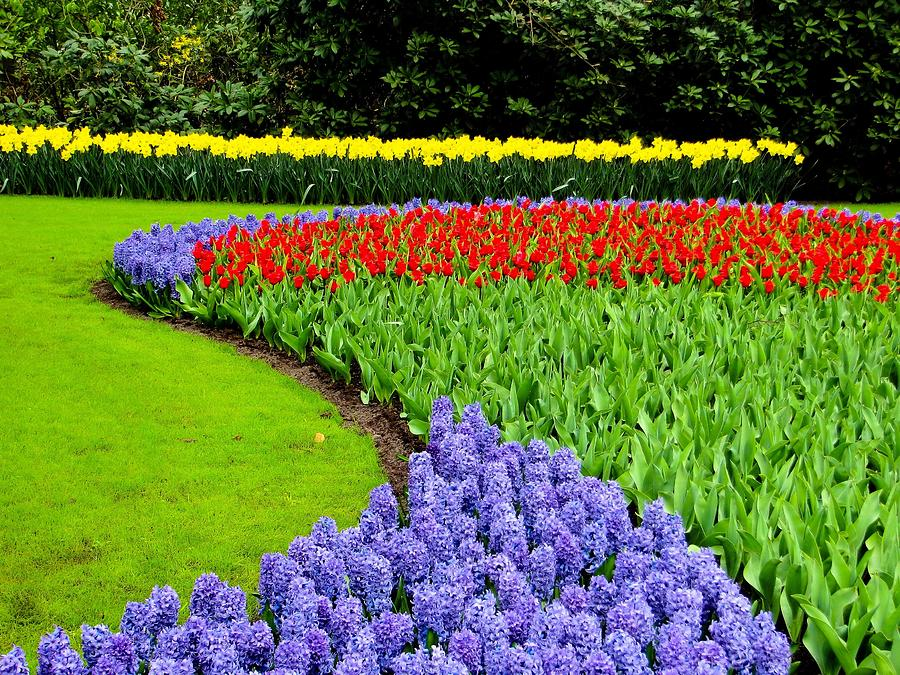 Flowers In Colors And Shape Photograph by David Dousa Photography