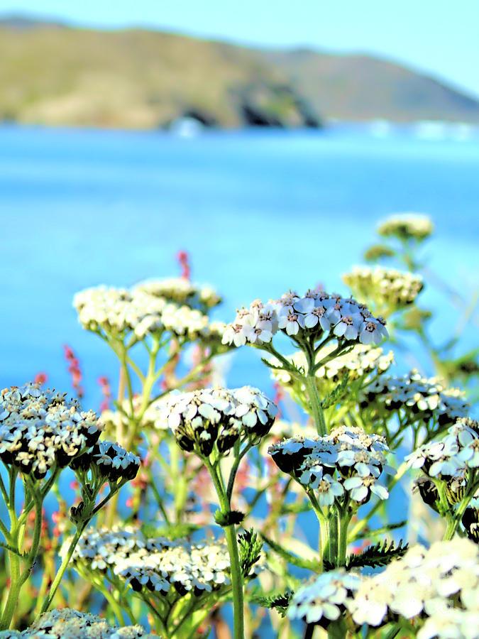 Flowers in Greenland by Susan Lafleur