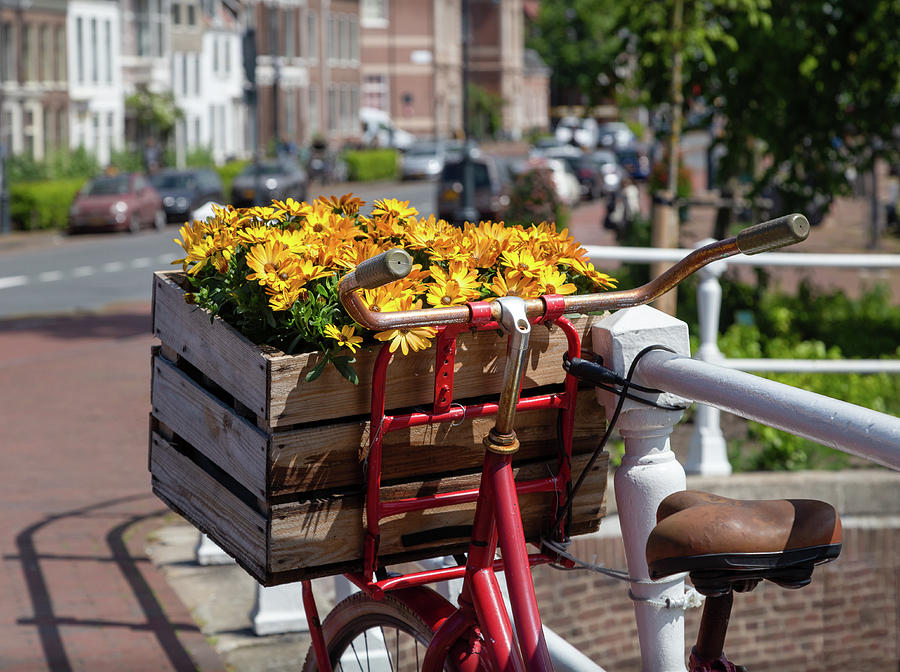Flowers in Haarlem by Georgia Fowler