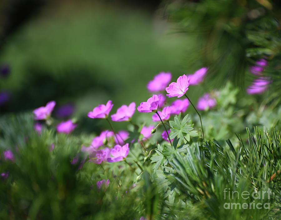 Flowers In the Garden by Kerri Farley