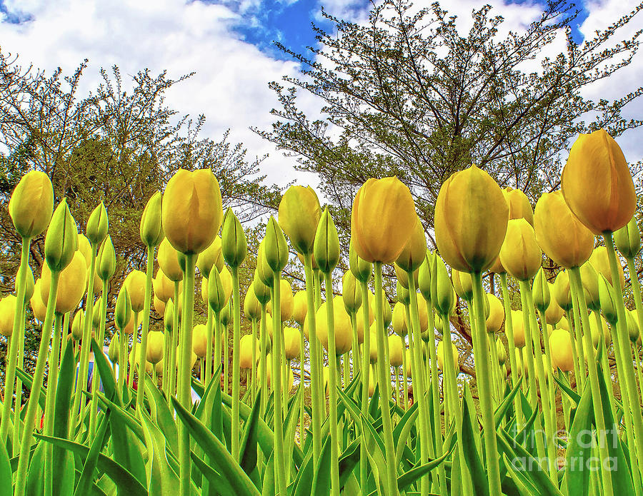 Flowers Looking Up by Nick Zelinsky