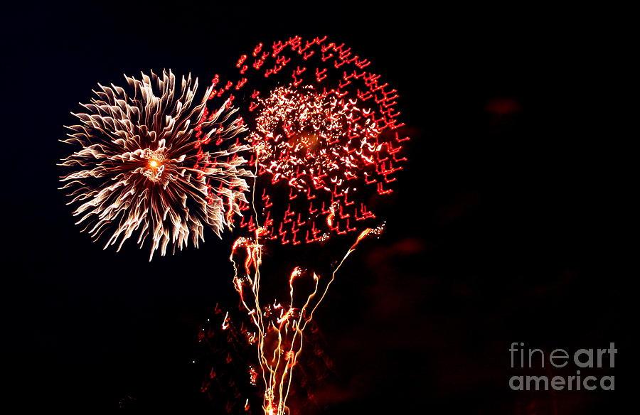 Flowers of The Night #3 by Marcia Lee Jones