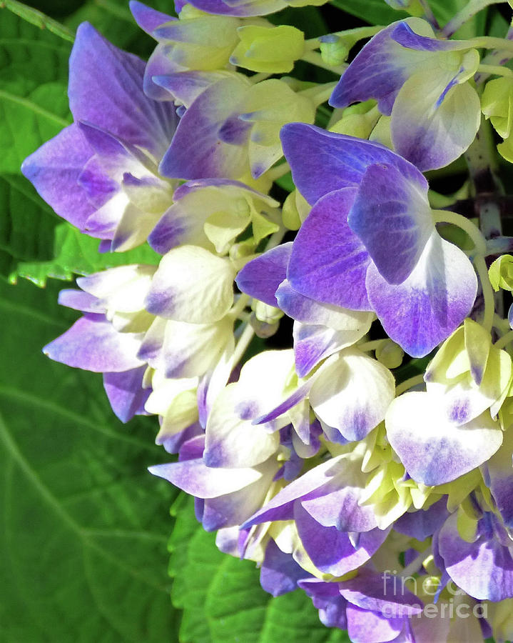 Flowers On The Vine 300 Photograph