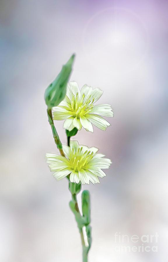 Flowers Too by Susan Warren