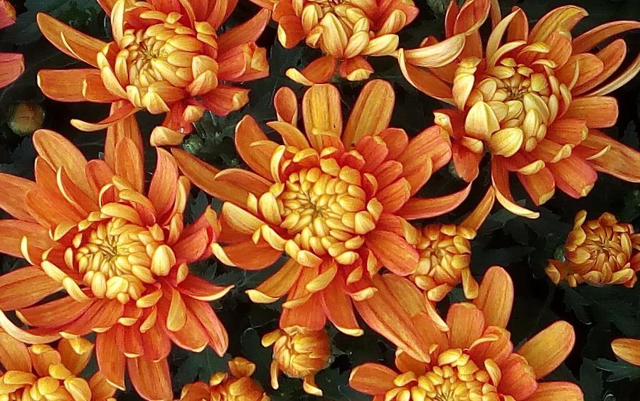 Flowers by Vittorio Chiampan