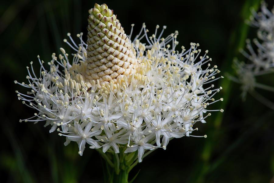 Flowerworks - Bear Grass Skirt by Matthew Irvin