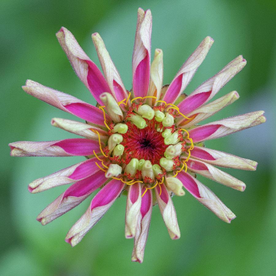 Flowerworks Number 2 by Matthew Irvin