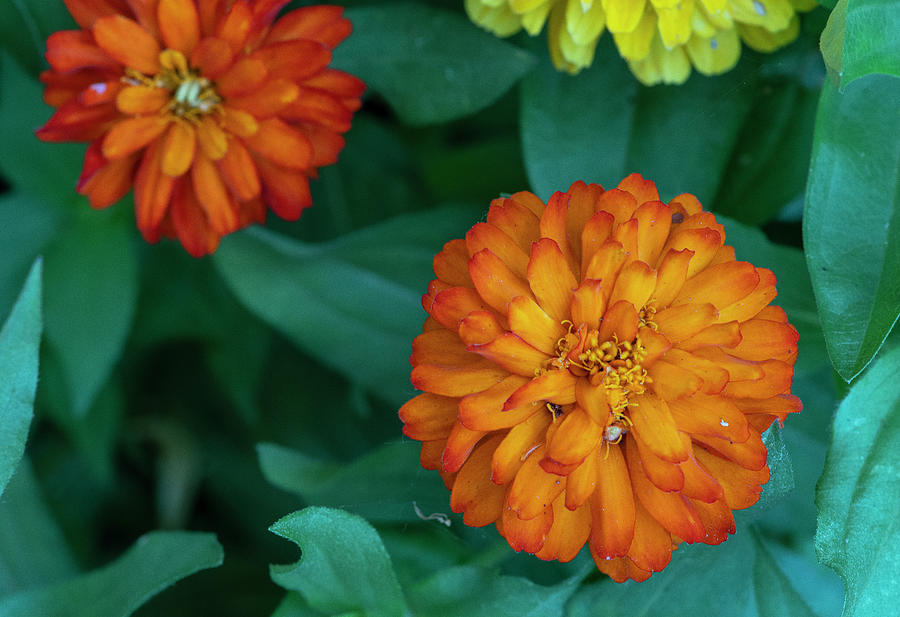 Flowerworks Number 3 by Matthew Irvin
