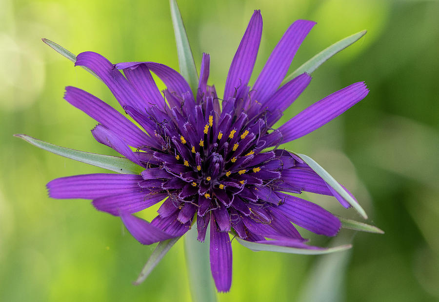 Flowerworks - Purple Flower No 1 by Matthew Irvin