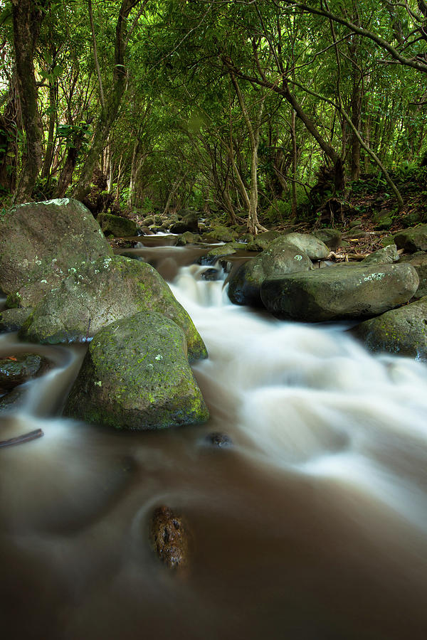Flowing Cascade In Rain Forest Of Photograph by Ingmar Wesemann