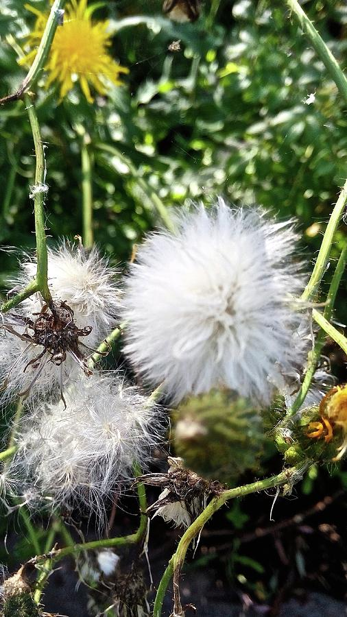 Fluff by Stephanie Moore