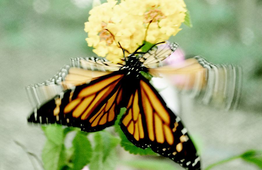 Fluttering Butterfly by Eileen Brymer