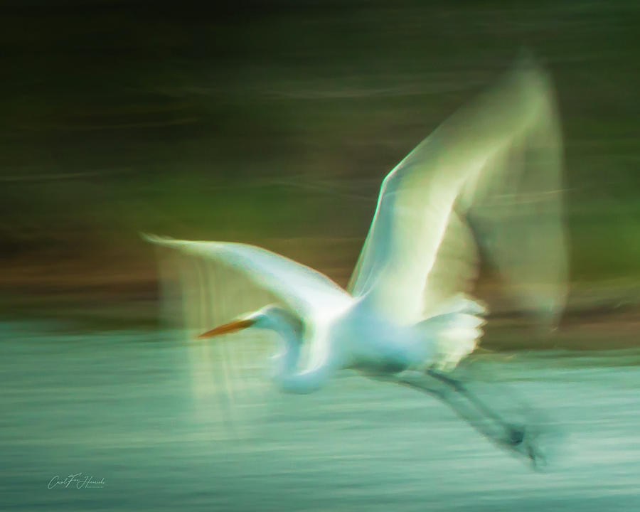 Fly Away by Carol Fox Henrichs