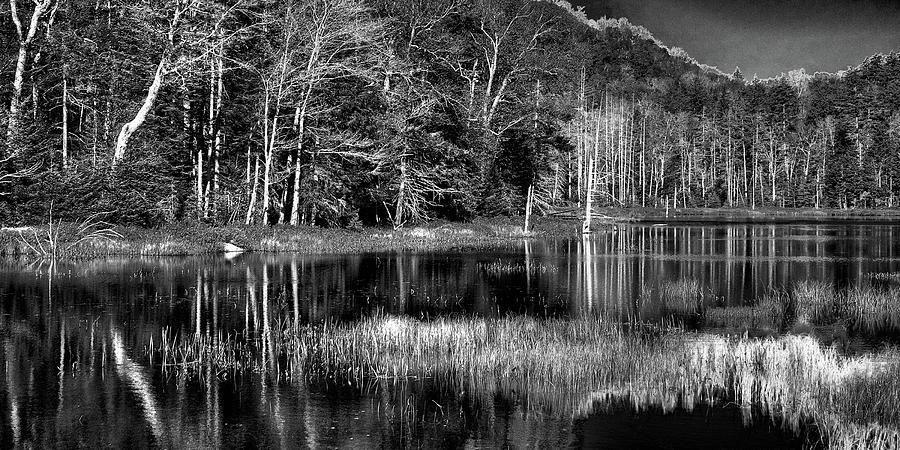 Fly Pond by David Patterson