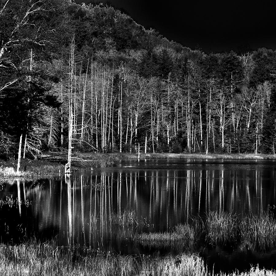 Fly Pond Reflection by David Patterson