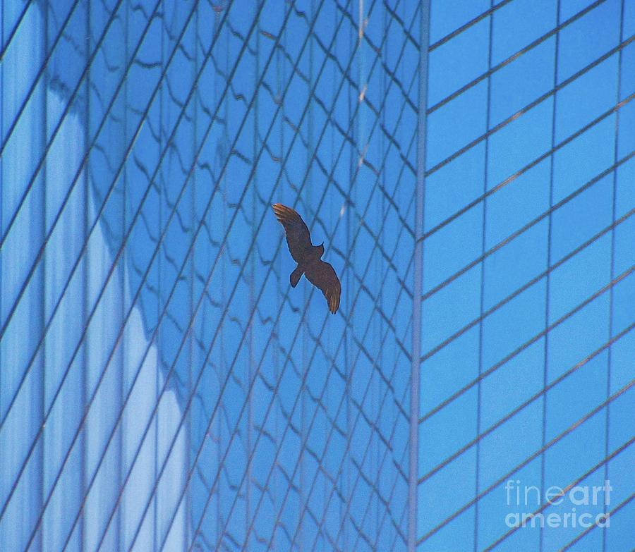 Bird Photograph - Flying Abstract by D Davila