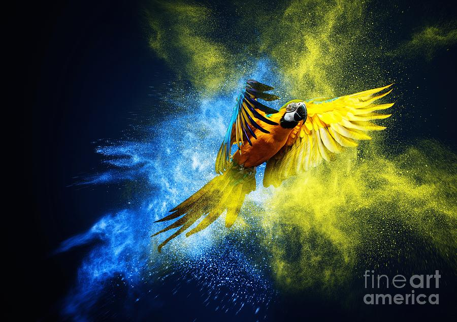 Feather Photograph - Flying Ara Parrot Over Colourful Powder by Nejron Photo