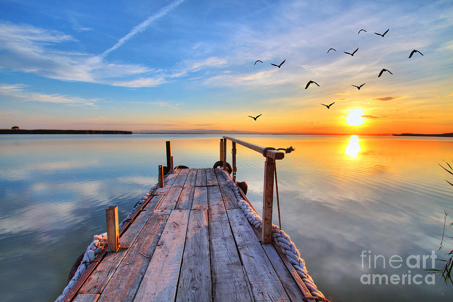 Love Photograph - Flying By The Lake by Kesipun