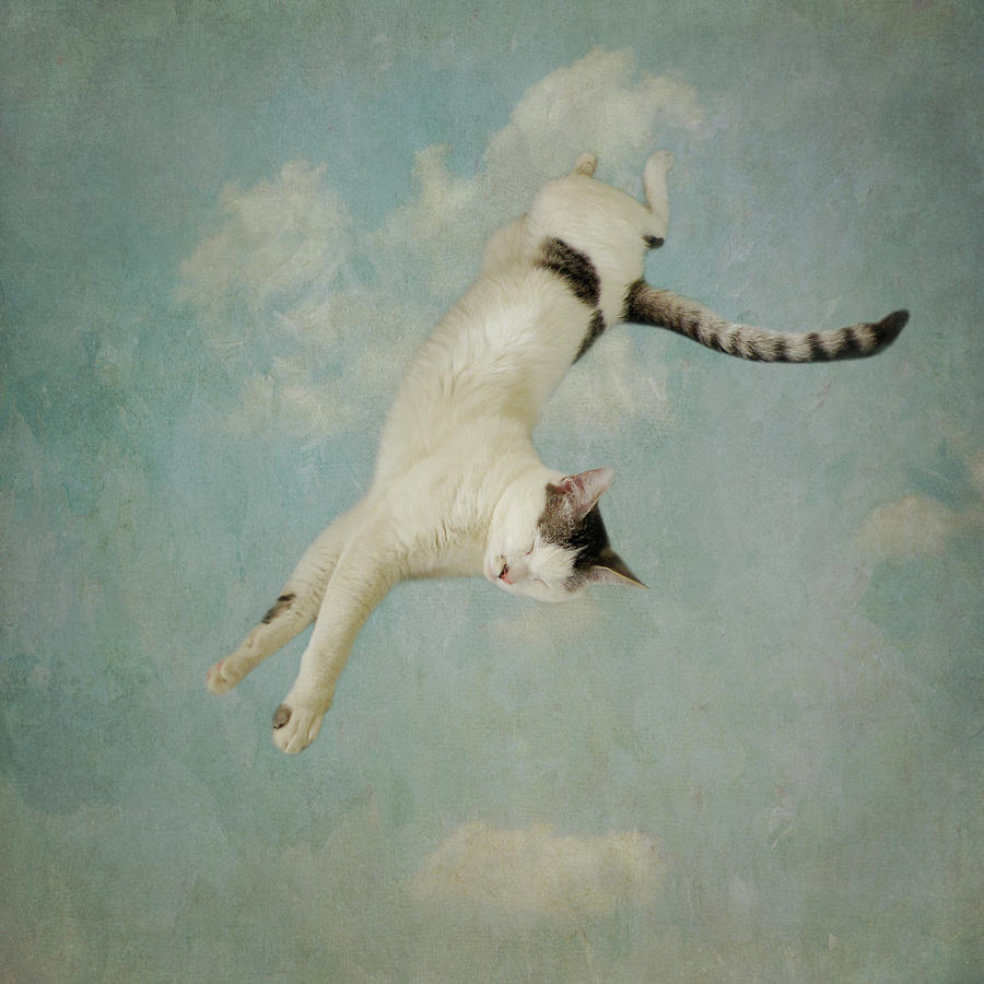 Flying Cat by Sally Banfill