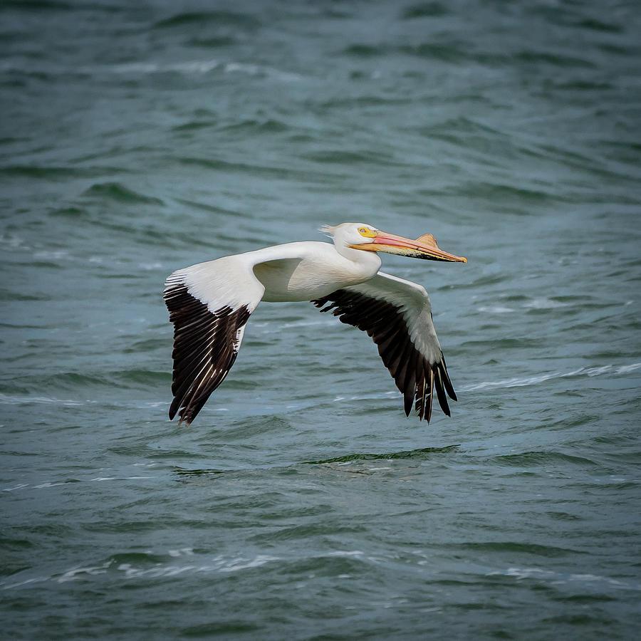 flying by David Heilman