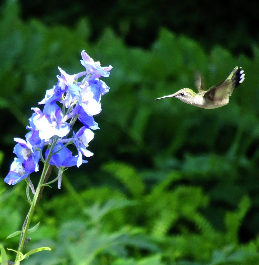 Flying In by Catherine Arcolio