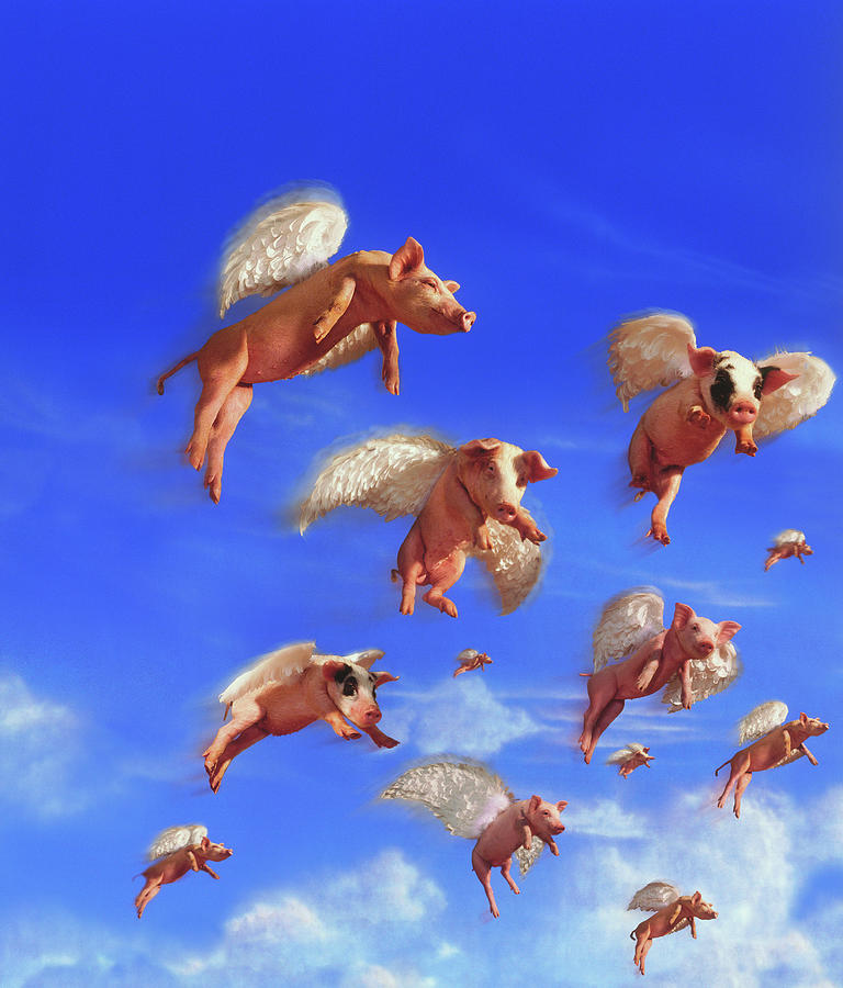 Flying Pigs Photograph by Jay P. Morgan