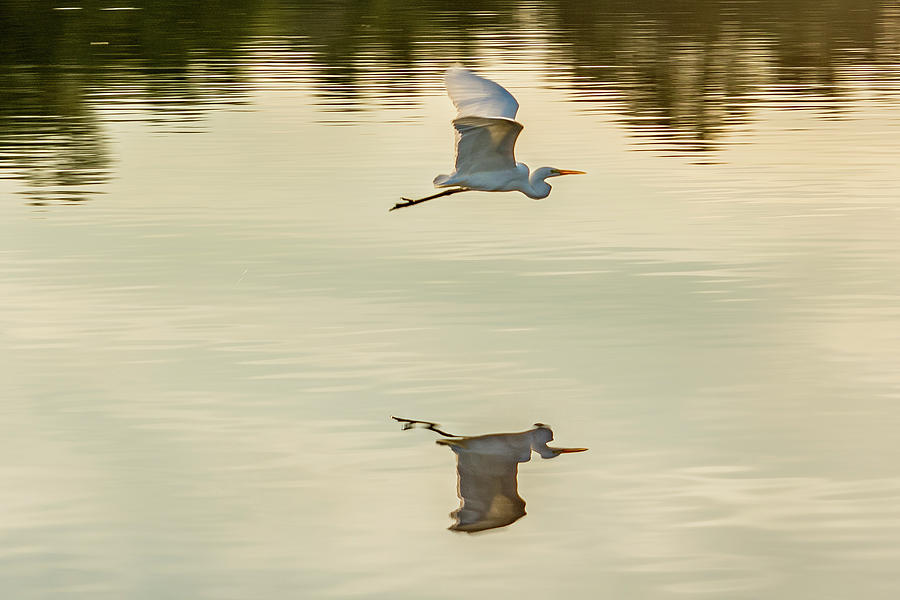 Flying Reflection by Jack Peterson