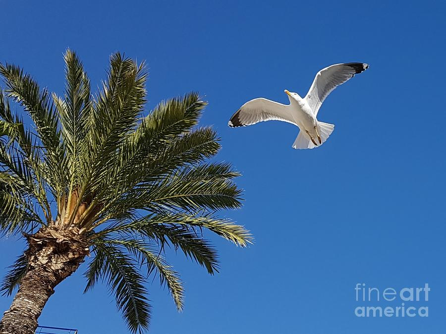 Flying seagull by Jeepee Aero