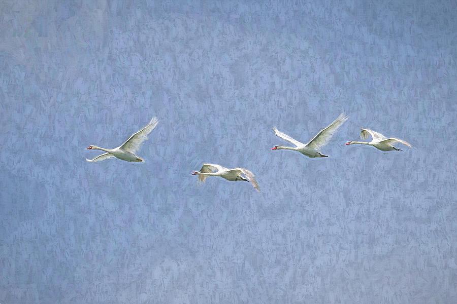 Flying Swans Art by David Pyatt