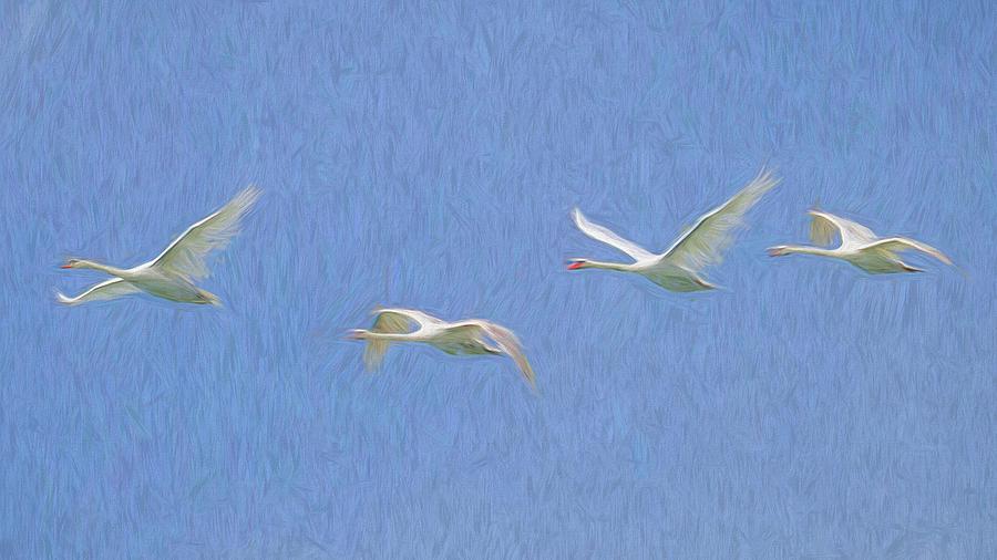 Flying Swans Art Panorama  by David Pyatt