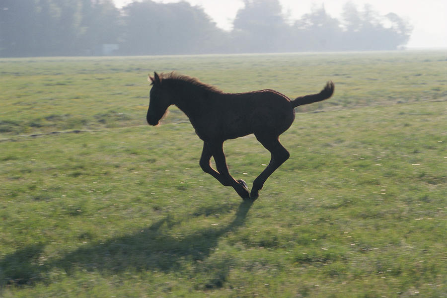 Foal Galloping In Field Photograph by Frans Lemmens
