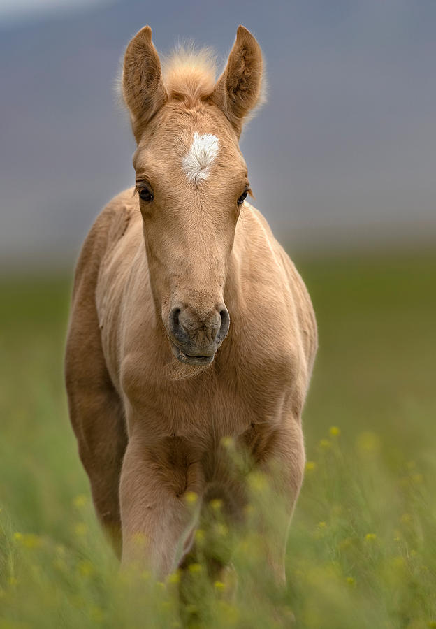 Foal in the tall Grass. by Paul Martin