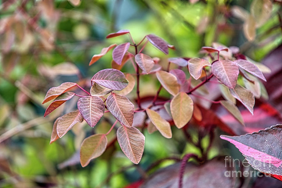 Focus on Leaves by Amy Dundon