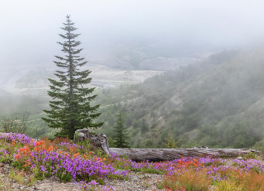 Fog and Wildflowers at Mount St Helens by Carolyn Derstine
