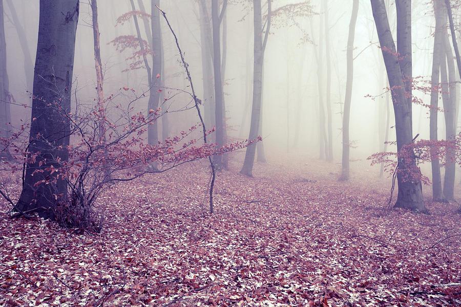 Fog Photograph by Floriana