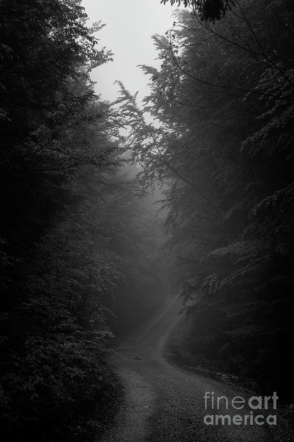 fog in the forest by Fabian Roessler