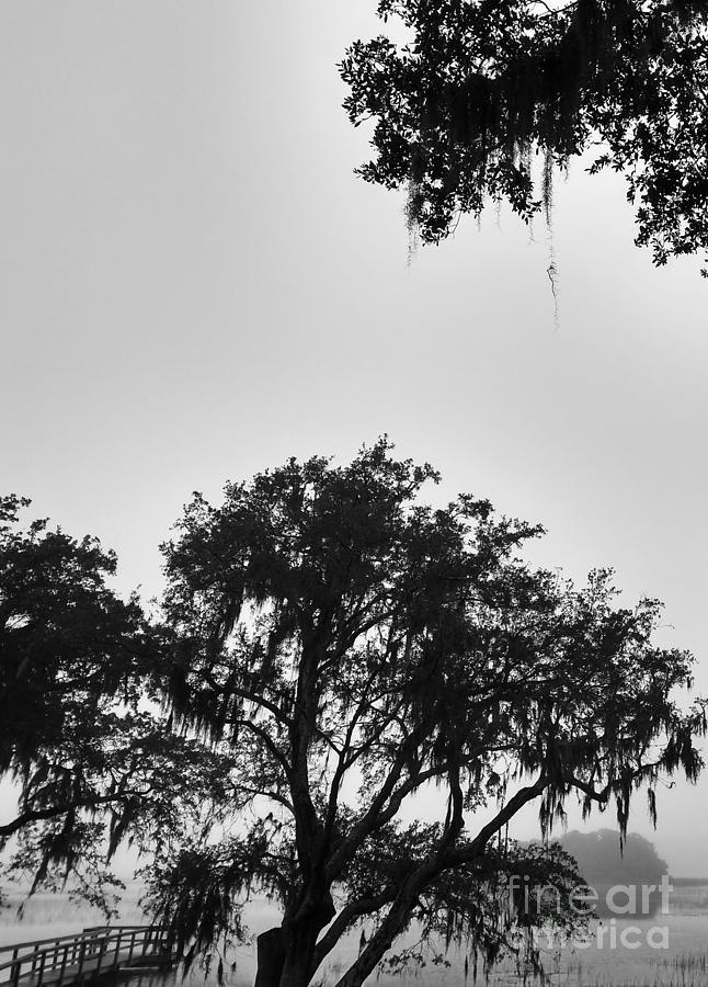 Johns Island Photograph - Fog Landing by Robert Knight