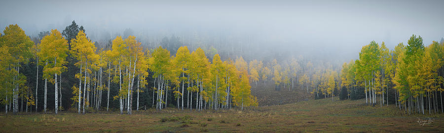 Aspens in the Fog by Richard Raul Photography