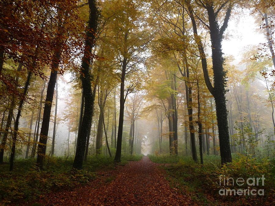 Foggy Autumn Forest by Eva Lechner